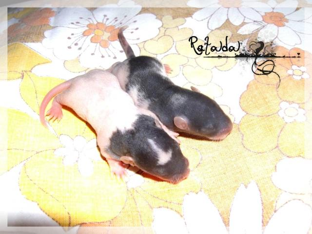[25] Ma petite Lolita est maman ^^ Dscf4987-ff4fb7