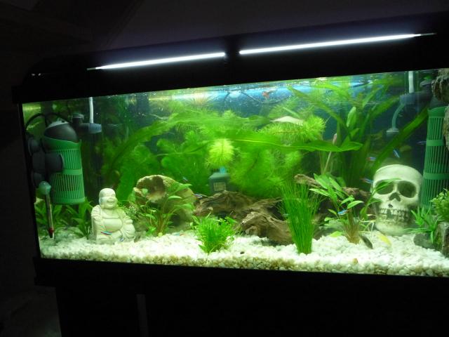 Boomcar mes aquarium for Site aquariophilie